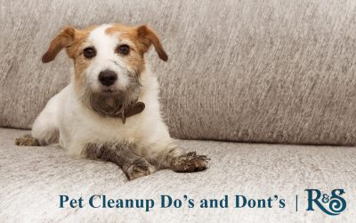 Pet Cleanup Do's and Dont's