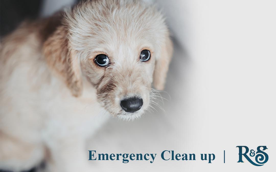 Emergency Cleanup